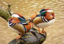 Wirral Bird Club
